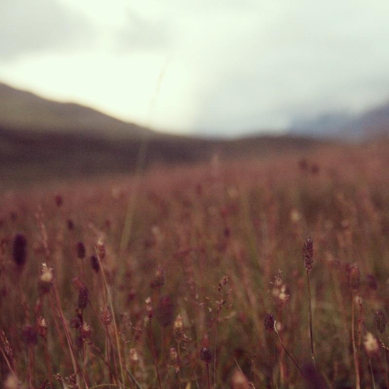 Fields of ancientflowers