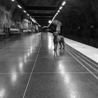 Zampa ran wild in the subway.