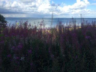 Skåne, as beautiful as ever.
